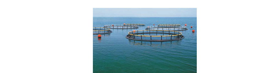 Ozone Applied in Aquaculture